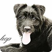 Adopt A Pet :: Bishop - Wallaceburg, ON