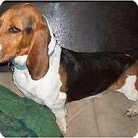 Adopt A Pet :: Ely - Phoenix, AZ