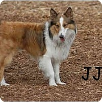 Adopt A Pet :: JJ - Ft. Myers, FL