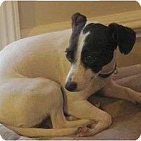 Adopt A Pet :: Sherry - Allentown, PA