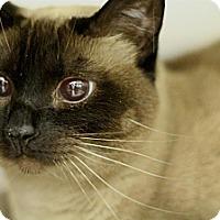 Adopt A Pet :: Karissa - Sacramento, CA