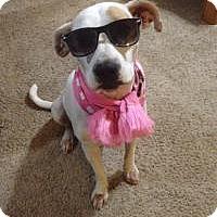 Adopt A Pet :: Delilah - Marlton, NJ
