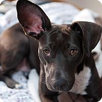 Adopt A Pet :: Fiona - Minneapolis, MN