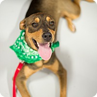 Adopt A Pet :: mIles - Muldrow, OK