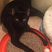 Adopt A Pet :: Gilbert - New  York City, NY