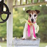 Adopt A Pet :: Sadie - Conyers, GA