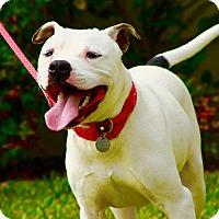 Adopt A Pet :: Franklin - Vancouver, BC