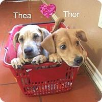 Adopt A Pet :: Thea - Jay, NY