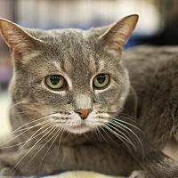 Adopt A Pet :: Caleb - Great Falls, MT