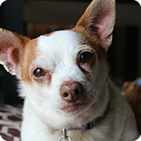 Adopt A Pet :: Kipper - Manhattan, KS