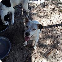 Adopt A Pet :: Allison - Marianna, FL