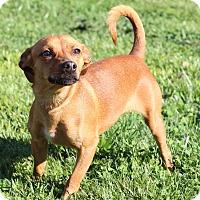 Adopt A Pet :: Reba - Waldorf, MD