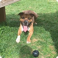 Adopt A Pet :: Rocko (COURTESY POST) - Baltimore, MD