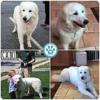 Adopt A Pet :: Cami - Kimberton, PA
