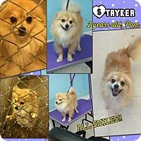 Adopt A Pet :: Stryker - Ponca City, OK