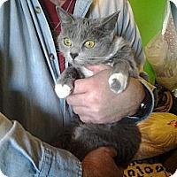 Adopt A Pet :: Spot & Sassy! - Seattle, WA