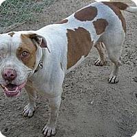 Adopt A Pet :: Punky - Fowler, CA