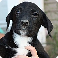 Adopt A Pet :: Amy - PENDING - kennebunkport, ME