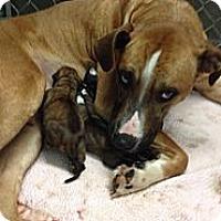 Adopt A Pet :: Kira - Wasilla, AK