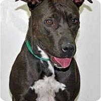 Adopt A Pet :: Spark - Port Washington, NY