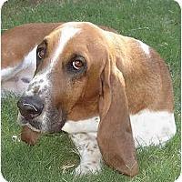 Adopt A Pet :: Wendel - Phoenix, AZ