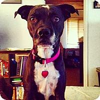 Adopt A Pet :: JET - Ojai, CA
