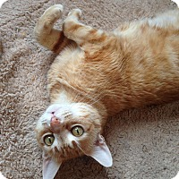 Adopt A Pet :: Blanket - Brooklyn, NY