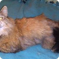 Adopt A Pet :: Mika - Colorado Springs, CO