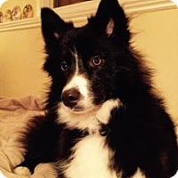 Adopt A Pet :: Jemma - Saskatoon, SK