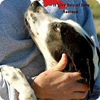 Adopt A Pet :: Samson - Franklinton, NC