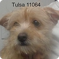 Adopt A Pet :: Tulsa - baltimore, MD