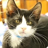 Adopt A Pet :: Ashe - Medina, OH