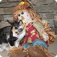 Adopt A Pet :: Stina - Herndon, VA