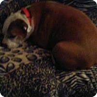 Adopt A Pet :: Gabrielle - Acushnet, MA