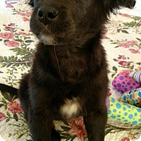 Adopt A Pet :: Cassie - Knoxville, TN