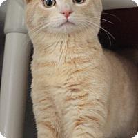 Adopt A Pet :: Brody - Carlisle, PA