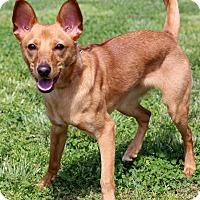 Adopt A Pet :: Jameis - Waldorf, MD