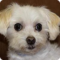 Adopt A Pet :: Rye - Colorado Springs, CO
