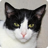 Adopt A Pet :: Apache - St. James City, FL