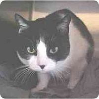 Adopt A Pet :: Punky - Lunenburg, MA