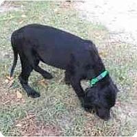 Adopt A Pet :: Jakey - Alexandria, VA