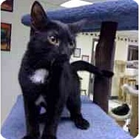 Adopt A Pet :: Tonto - Milwaukee, WI