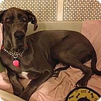 Adopt A Pet :: Roxi #2 - York, PA