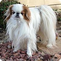 Adopt A Pet :: Jack - Aurora, CO