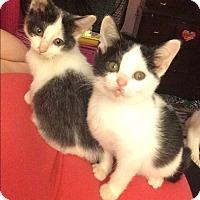 Adopt A Pet :: Lil Bit - Newfield, NJ