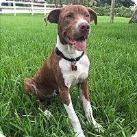 Adopt A Pet :: Barry - Ft. Myers, FL