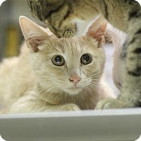 Adopt A Pet :: Pumpkin - Mount Laurel, NJ