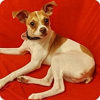 Adopt A Pet :: Squirrel - Astoria, NY