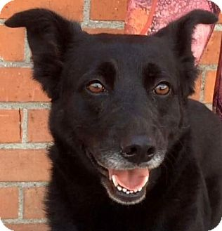 Cattle Dog/Shepherd (Unknown Type) Mix Dog for adoption in Los Angeles, California - ESME (video)