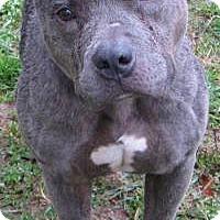 Adopt A Pet :: Donner, D52 - Mineral, VA